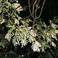 Mariposas perchadas en Maderas - Foto Luis Miranda