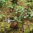 Mariposas y vegetación por todas partes - Foto Luis Miranda