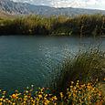Cuatro Ciénegas Un Paraíso por Donde Cruza la Monarca, Coahuila, México - Foto Chrstian Wenhammar