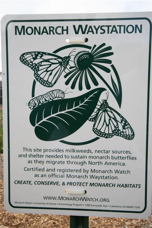 Monarch Waystation Monarch Watch Org. - Foto Luis Miranda