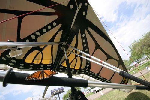 Monarca quiere volar Papalotzin - Foto Vico Gutiérrez