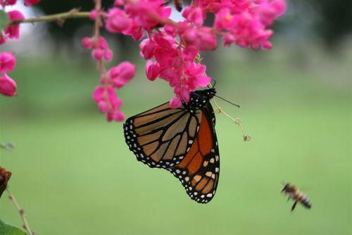 Monarcas y mas insectos - Foto Luis Miranda