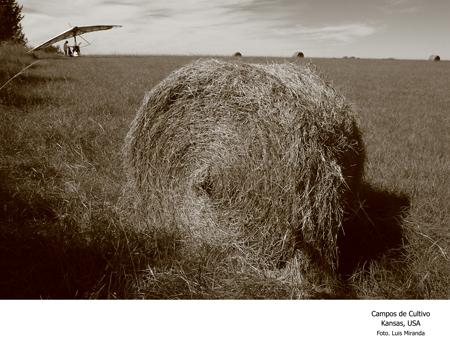 Campos de Cultivo, Kansas, EU - Foto Luis Miranda