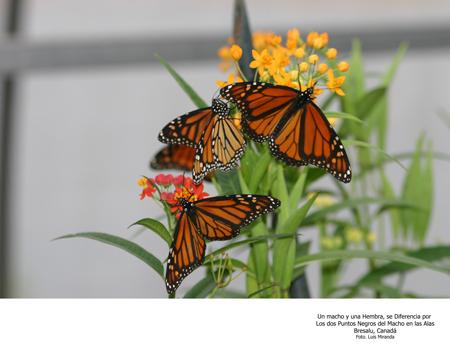 Mariposas - Foto Luis Miranda