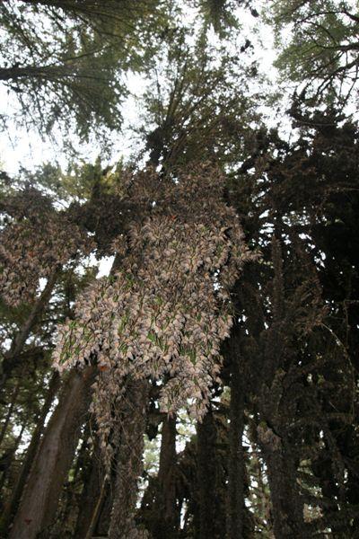 Millones en un solo árbol - Foto Luis Miranda