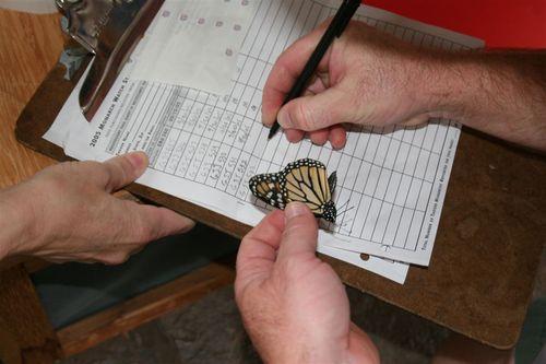Registro de Tagging - Foto Luis Miranda