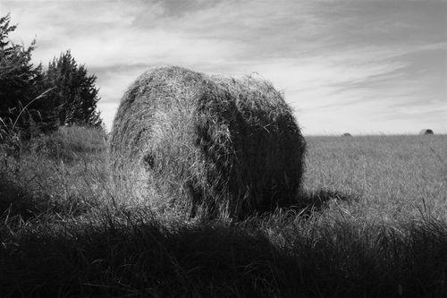 Una Vista cotidiana de los campos Norteamericanos - Foto Luis Miranda